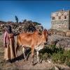 Йемен. Девочка с коровой в горах Хараз