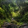 В джунглях острова Ломбок