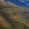 Рисовые террасы Пин Ань
