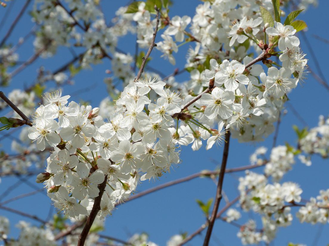 Весенние цветы (Россия) 2.jpg