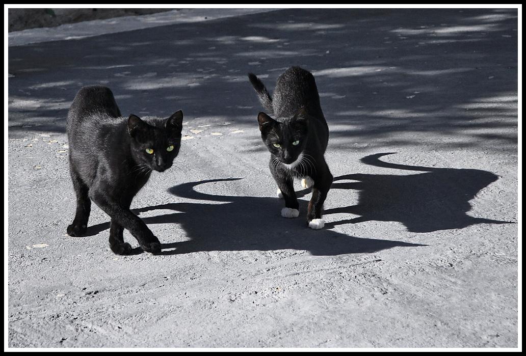 черные кошки.jpg